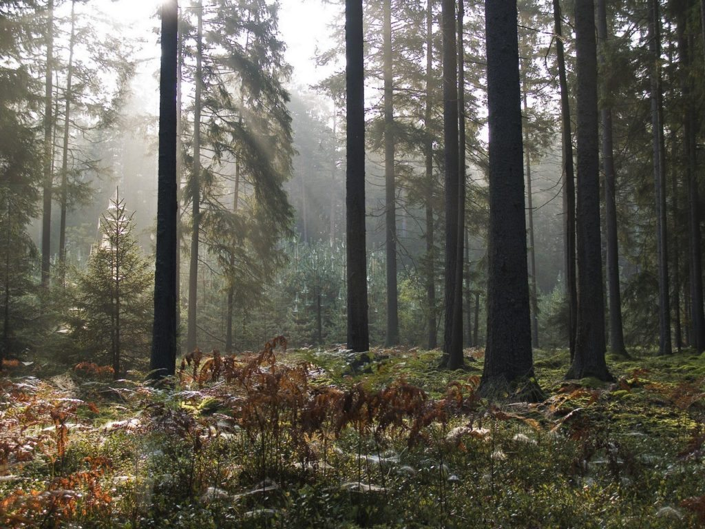 Nature reserves and national parks in Belarus. Fog in the forest