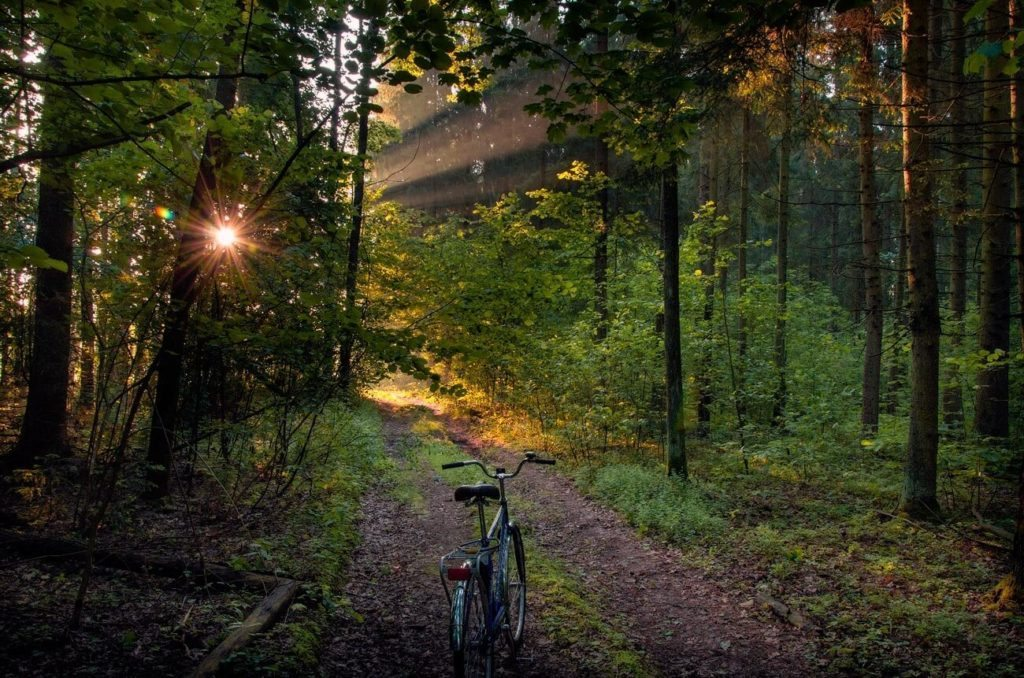national park bike path belarus