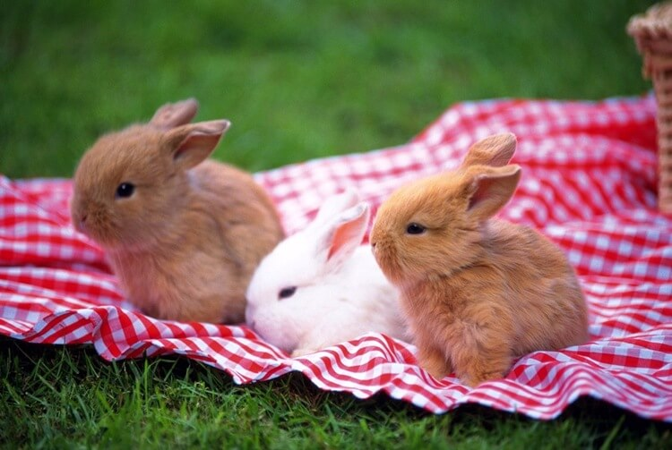 Small rabbits in Minsk zoo