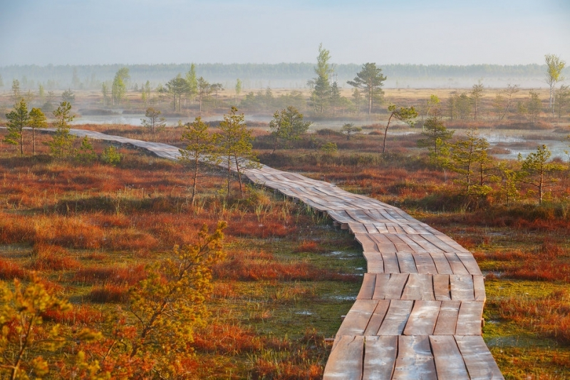 красивое болото в Беларуси