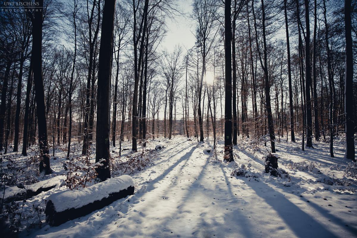 красивый белорусский лес